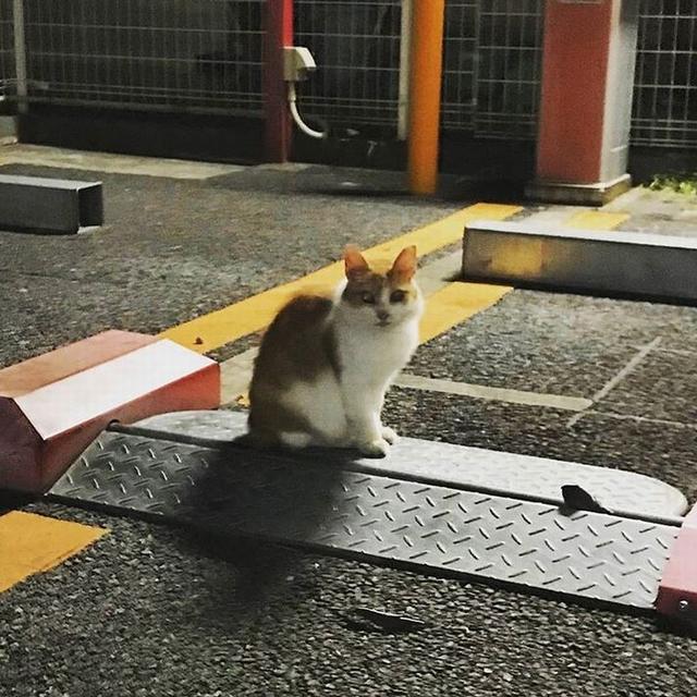 猫と人探し